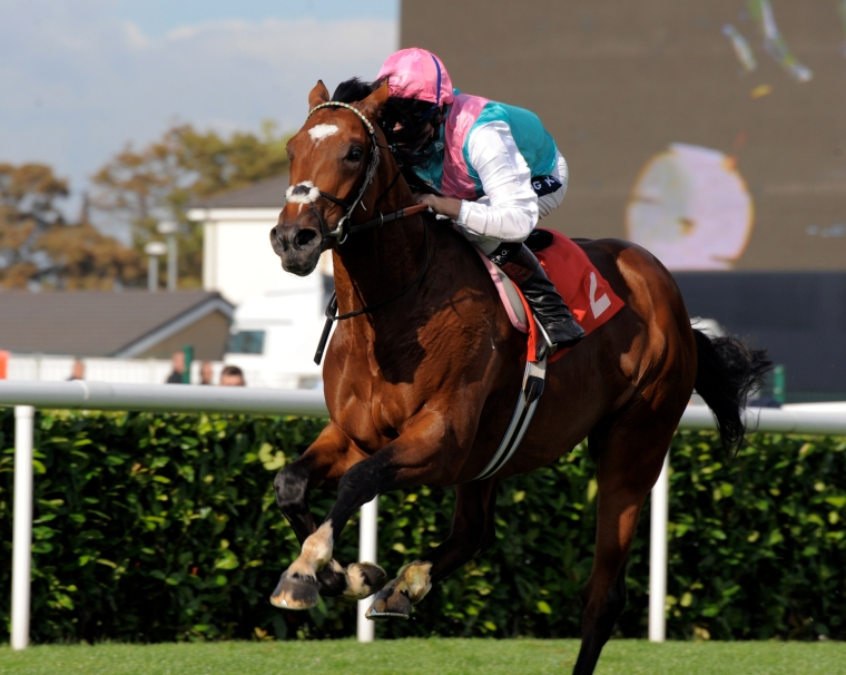 Dawn Ades on the racehorse, Frankel