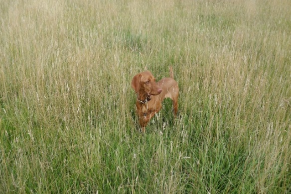 """Dog and Grass"" Copyright John Haynes 2013"